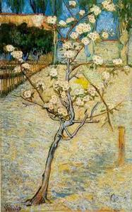 Vincent Van Gogh - Fioritura Pear Tree