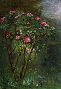 Gustave Caillebotte - rose `bush` in fiore