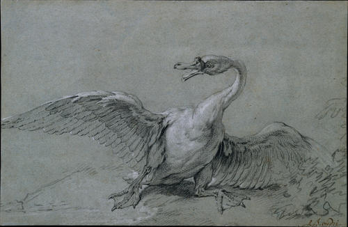 Swan Angry di Jean-Baptiste Oudry (1686-1755, France)