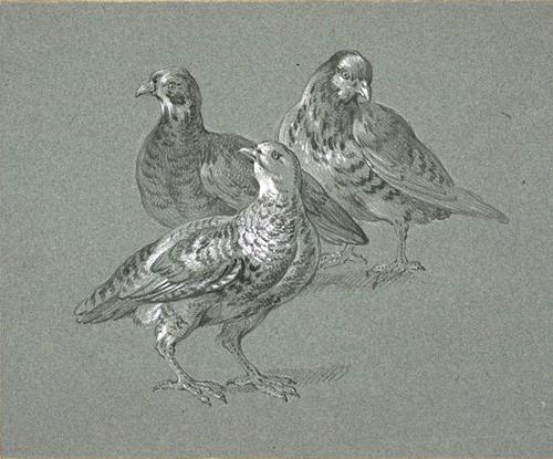 Trois perdrix di Jean-Baptiste Oudry (1686-1755, France)