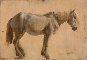 Jacques Laurent Agasse - studio di una Grigio  cavallo