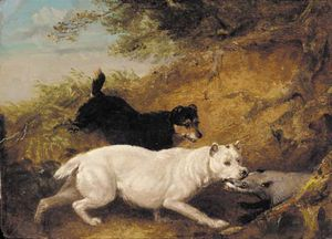 George Armfield (Smith) - terrier Attaccare  Un  tasso