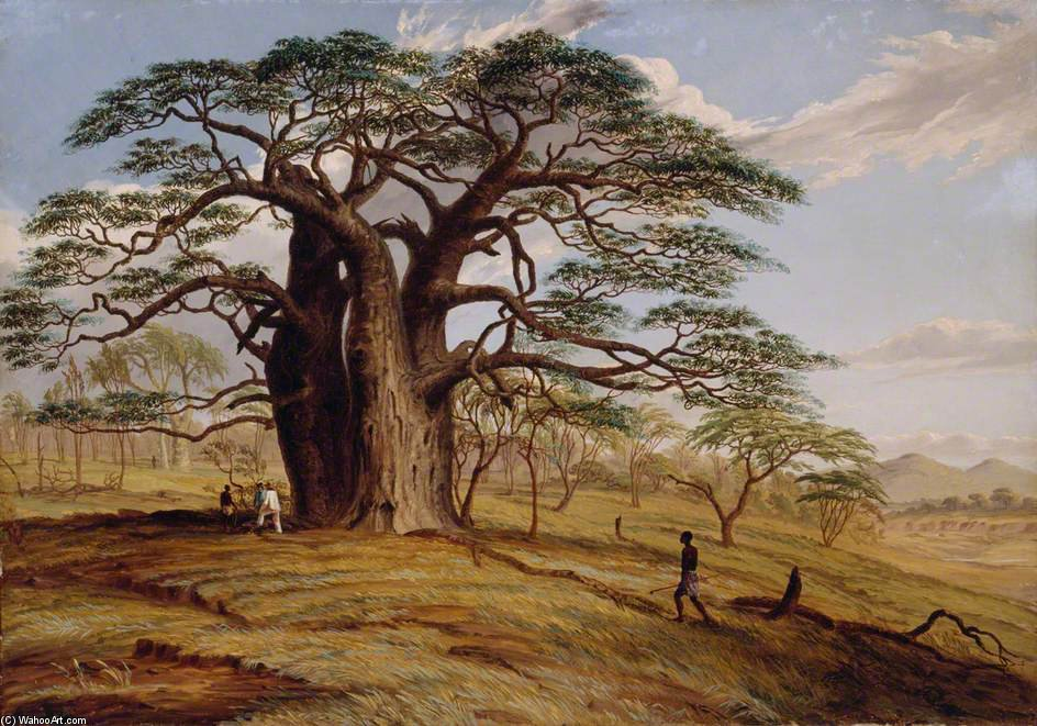 Un Baobab vicino alla riva del The Lue di Thomas Baines (1820-1875, United Kingdom)