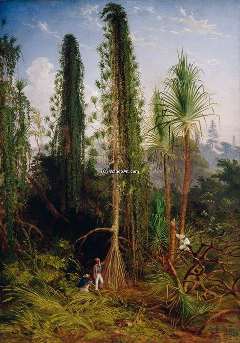 Pandanus di Thomas Baines (1820-1875, United Kingdom)