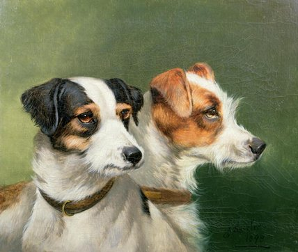 due Volpe  terrier  di John Alfred Wheeler (1821-1903, United Kingdom)