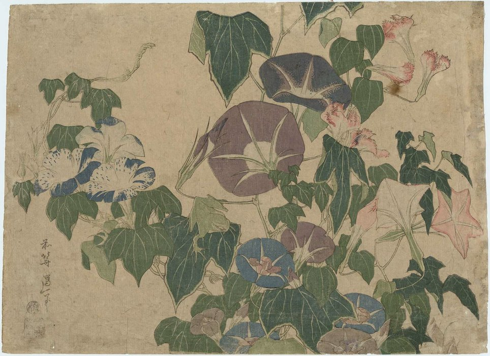 morning glories e l'albero Rana di Katsushika Hokusai (1760-1849, Japan)