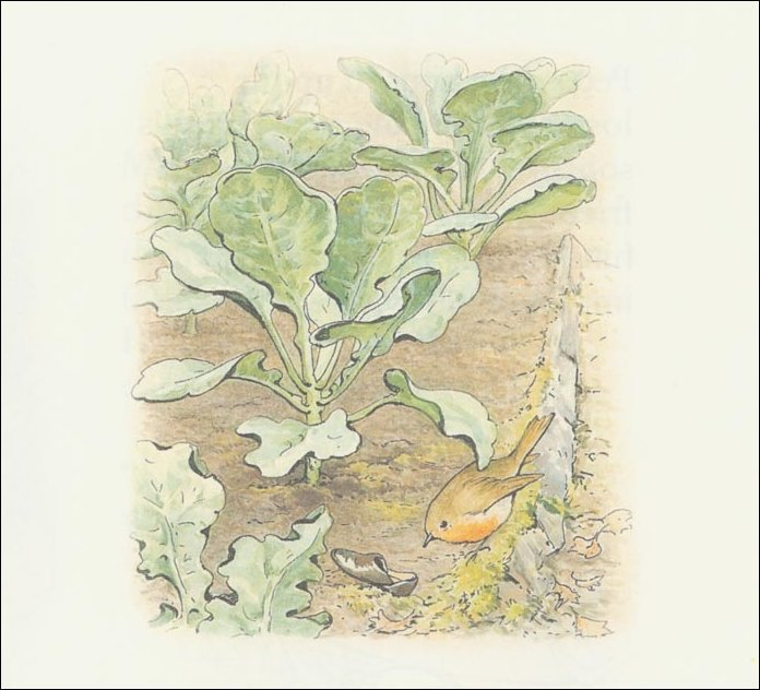 Peter 13a rabbit - (11x11) di Beatrix Potter (1866-1943)