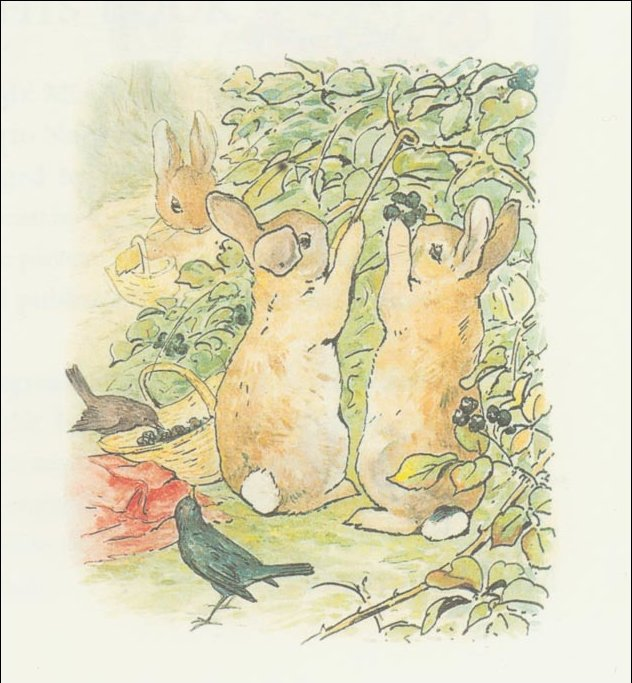 Peter 7a rabbit - (11x11) di Beatrix Potter (1866-1943)