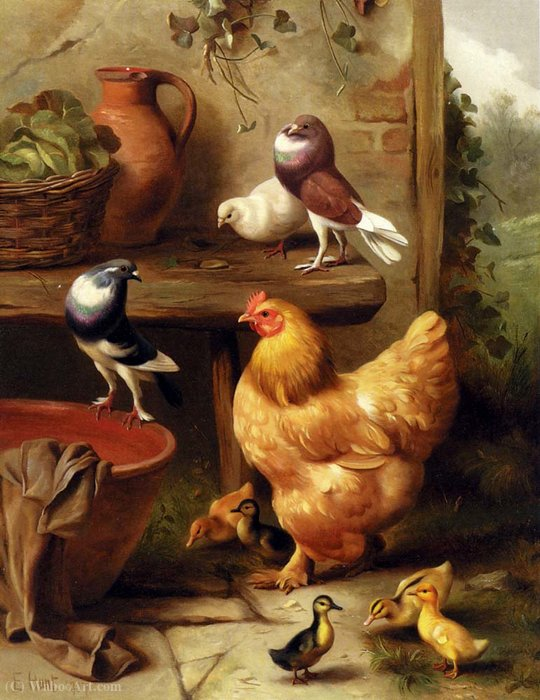 A colombe pollo piccioni e anatroccoli di Edgar Hunt