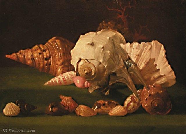 Natura morta con conchiglie di simon renard de saint andr 1613 1677 france - Vanite simon renard de saint andre ...