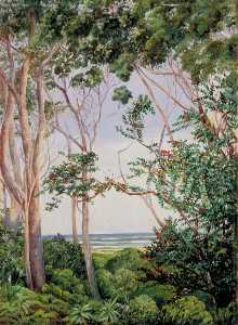 Marianne North - Alberi dal Artist's Capanna a st John's , sud africa