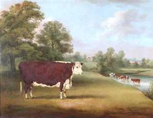 William Henry Davis - Hereford Mucca vicino Cronkhill Agriturismo