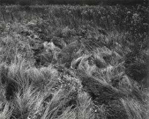 Harry Callahan - il michigan