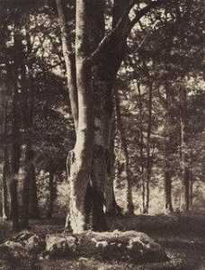 Gustave Le Gray - Foresta di Fontainebleau