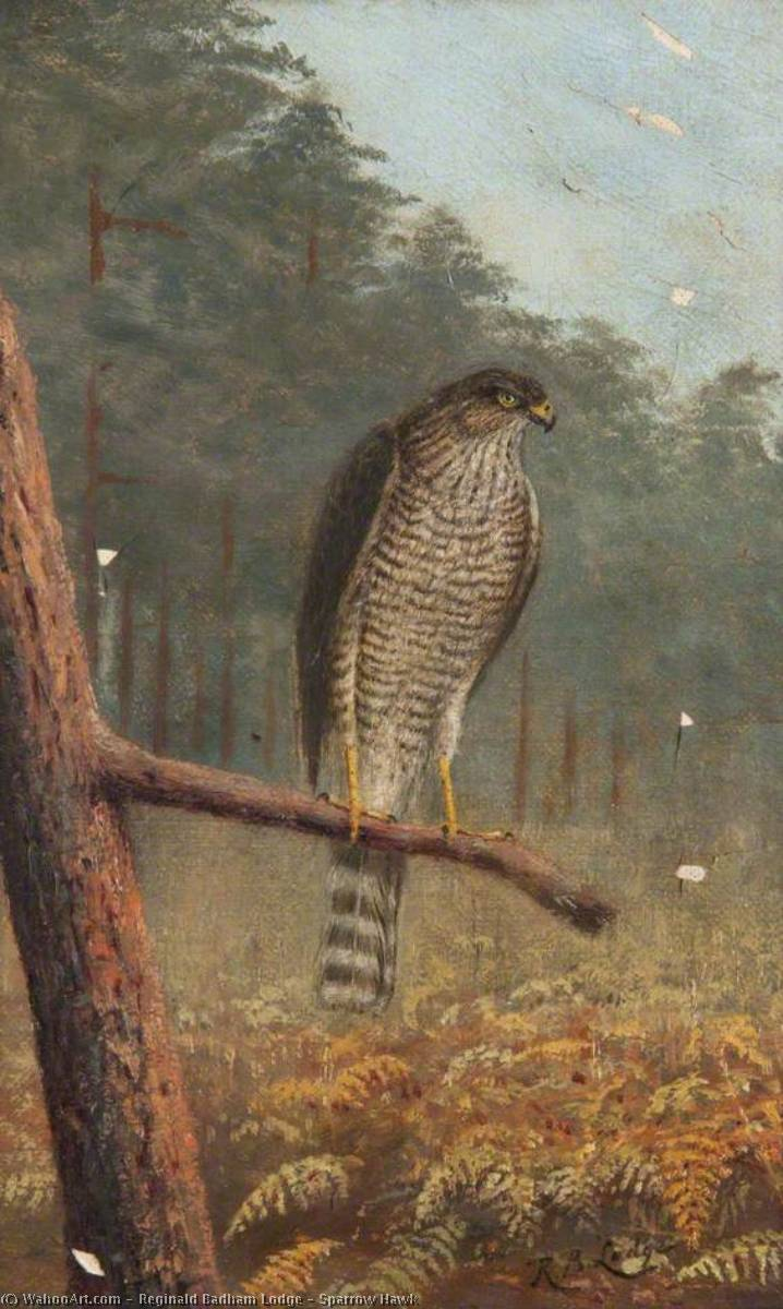 passero Falco  di Reginald Badham Lodge | Copia Pittura | WahooArt.com